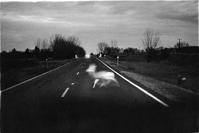 CHUCK FORSMAN, Intruders, near Roundup, Montana black & white photograph