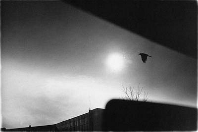CHUCK FORSMAN, Raven, Boulder, Colorado black & white photograph