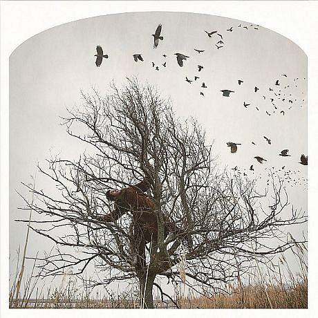 KAHN + SELESNICK, RAVEN TREE  Ed. 5 pigment print