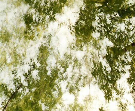 EDIE WINOGRADE, CLEAR AIR (green 5) photograph