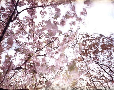 EDIE WINOGRADE, CLEAR AIR (pink 3) photograph