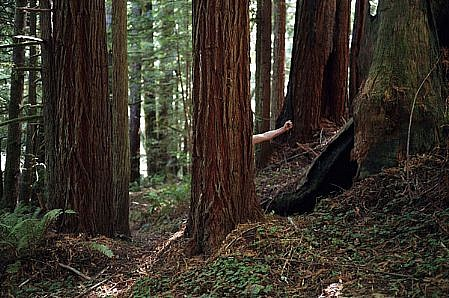 "WILLIAM LAMSON, RED WOOD NATIONAL FOREST, CALIFORNIA) 1/12 ""ME IN AMERICA' C-print"