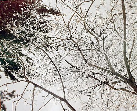 EDIE WINOGRADE, CLEAR AIR (snow #2) photograph