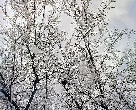 EDIE WINOGRADE, CLEAR AIR (snow #3) photograph
