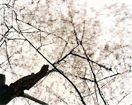 EDIE WINOGRADE, CLEAR AIR (white 1) photograph