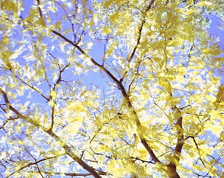 EDIE WINOGRADE, CLEAR AIR (yellow #1) photograph