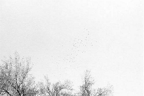 KEVIN O'CONNELL, FLIGHT OF BIRDS ED. 1/25 platinum print