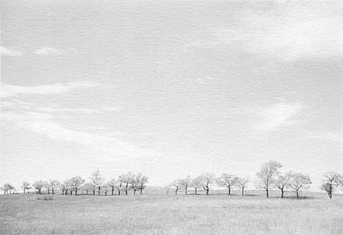 KEVIN O'CONNELL, TREES NEAR WOUNDED KNEE ED. 1/25 platinum print