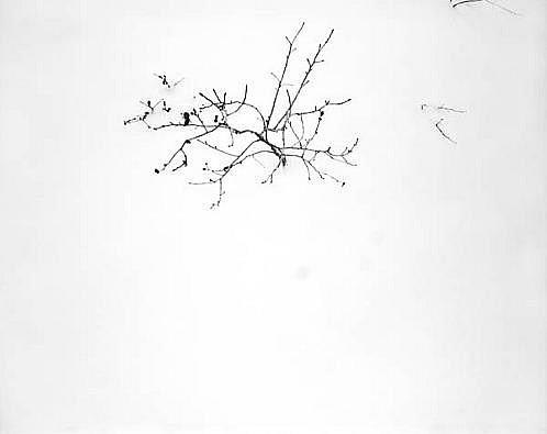 EDIE WINOGRADE, FIGURE/GROUND FROZEN: UNTITLED #11 silver gelatin photograph