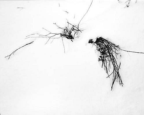 EDIE WINOGRADE, FIGURE/GROUND FROZEN: UNTITLED #4 silver gelatin photograph