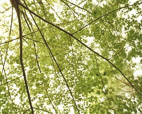 EDIE WINOGRADE, CLEAR AIR (green 4) photograph
