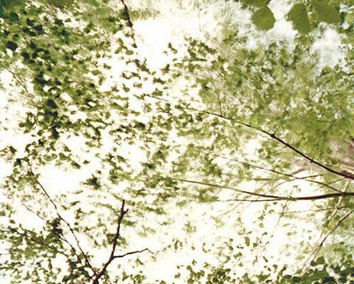 EDIE WINOGRADE, CLEAR AIR (green 7) photograph
