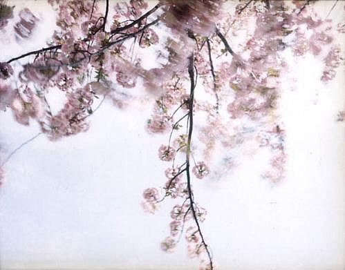 EDIE WINOGRADE, CLEAR AIR (pink 2) photograph