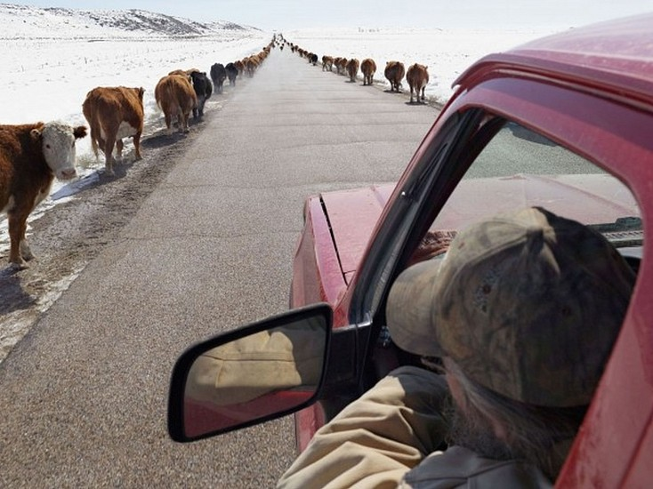 LUCAS FOGLIA, FRONTCOUNTRY MOVING CATTLE TO SPRING PASTURE, BOULDER, WYOMING Ed.8 digital C-print on Fuji Crystal Archive paper