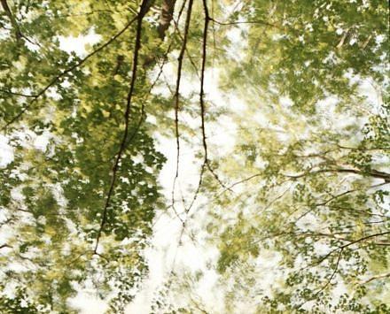EDIE WINOGRADE, CLEAR AIR (green 6) photograph