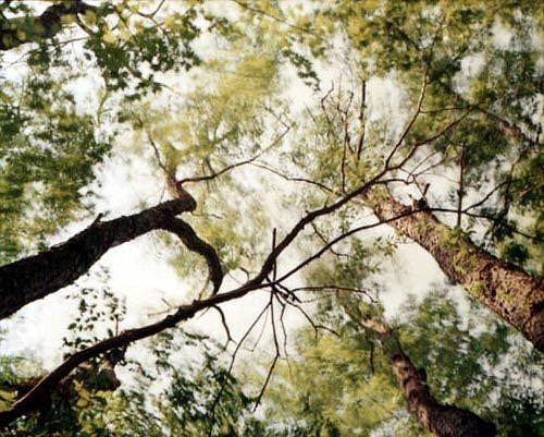 EDIE WINOGRADE, CLEAR AIR (green 10) photograph