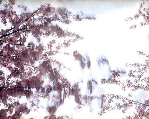 EDIE WINOGRADE, CLEAR AIR (pink 1) photograph