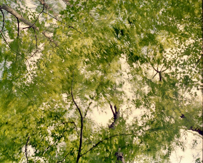EDIE WINOGRADE, CLEAR AIR (green 8) photograph