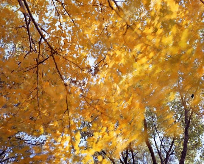 EDIE WINOGRADE, CLEAR AIR (orange 7) photograph