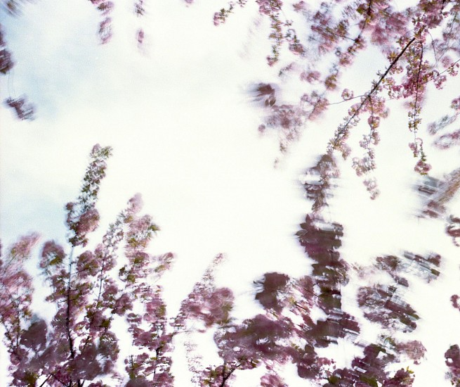 EDIE WINOGRADE, CLEAR AIR (pink 5) photograph
