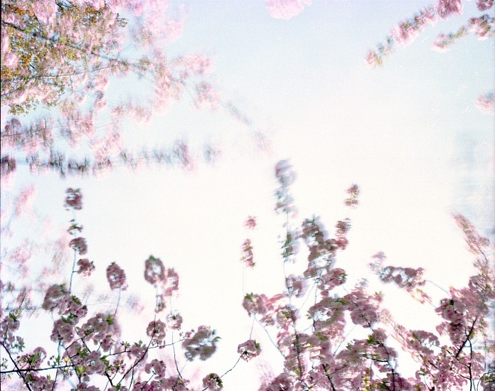 EDIE WINOGRADE, CLEAR AIR (pink 6) photograph