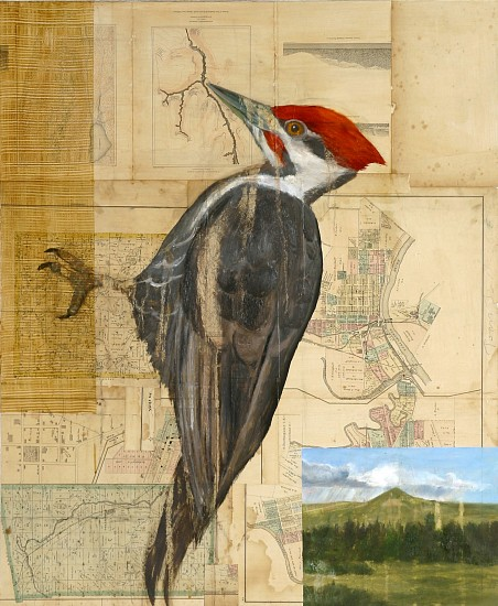 TOM JUDD, WOODPECKER #4 oil, graphite and collage on panel