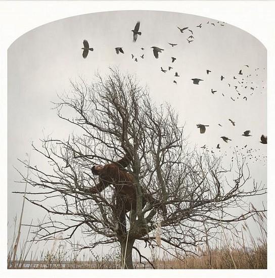 KAHN + SELESNICK, THE RAVEN TREE Ed. 5 pigment print