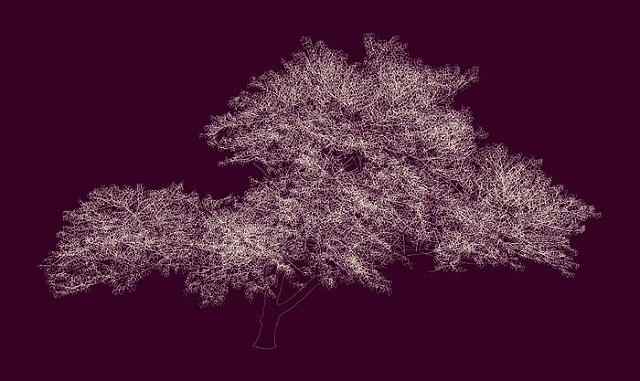 "ANDREW MILLNER, 38º 39' 16.66""N, 90º 18' 43.6""W (RED BUD) 8/15 lightjet print mounted on Plexiglas"