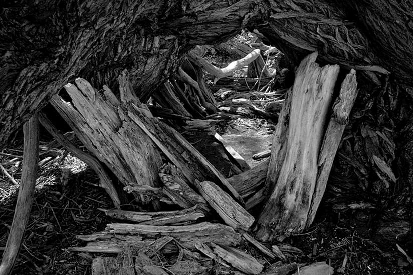 RICHARD VAN PELT, FOUR MILE CANYON CREEK AT PALO PARK, BOULDER, COLORADO 1146 pigment print