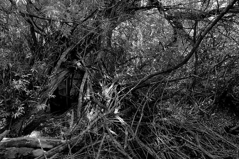 RICHARD VAN PELT, BEAR CREEK CANYON DRAINAGE, BOULDER,  COLORADO 1384 pigment print