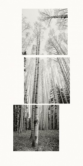 MICHAEL BERMAN, ASPENS WHITEWATER SADDLE pigment print on Kozo paper