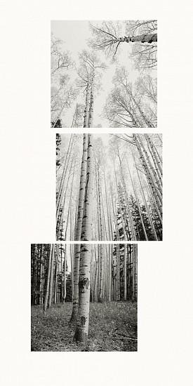 MICHAEL BERMAN, ASPENS WHITEWATER SADDLE pigment print on Kozo paper