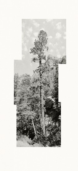 MICHAEL BERMAN, PONDEROSA MOGOLLON CREEK pigment print on Kozo paper
