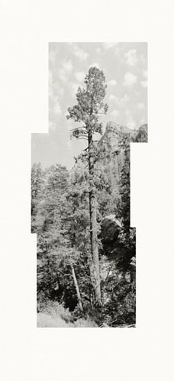 MICHAEL BERMAN, PONDEROSA MOGOLLON CREEK pigment print on Kozo paper
