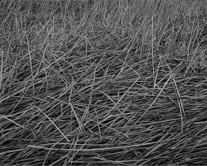 MICHAEL BERMAN, REEDS I, INDEPENDENCE CREEK Ed. 12 pigment print