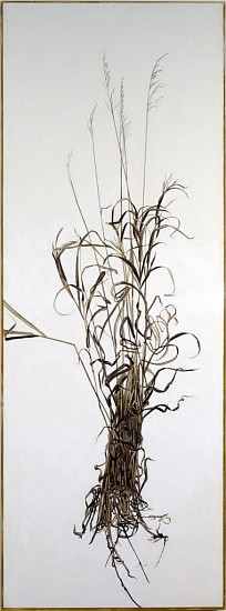 KAREN KITCHEL, ACTUAL SIZE #1 (TALL GRASS) walnut ink, sepia ink, acrylic, rhoplex/vellum