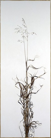KAREN KITCHEL, ACTUAL SIZE #5  (TALL GRASS) walnut ink, sepia ink, acrylic, rhoplex/vellum
