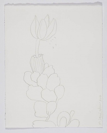ANA MARIA HERNANDO, TAXA BOTANICAL, POLINATION II Graphite on Paper