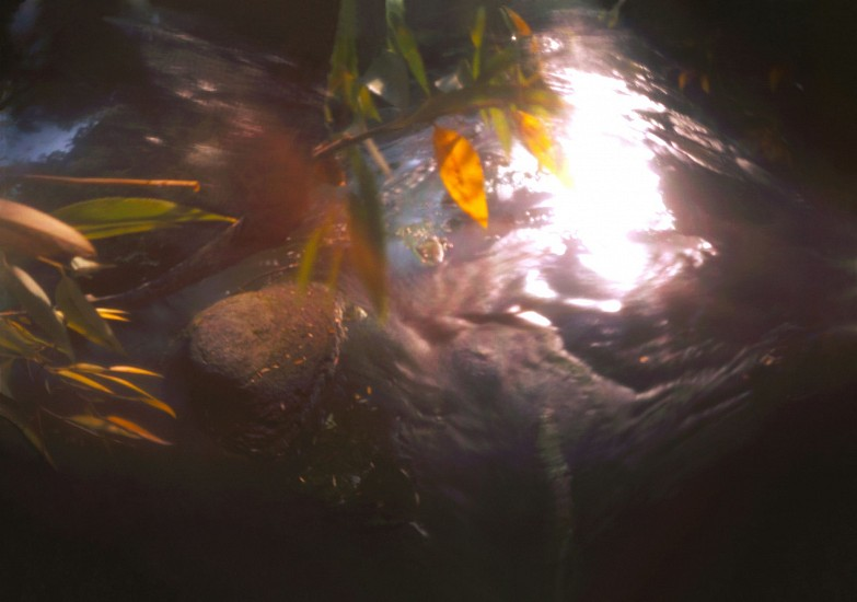 DAVID SHARPE, WATERTHREAD 42 color pinhole photograph