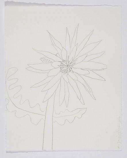 ANA MARIA HERNANDO, SAN PEDRO FLOWER I Graphite on Paper