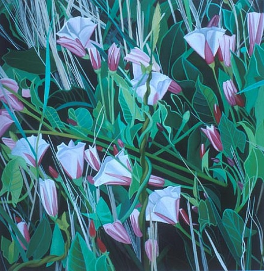 KAREN KITCHEL, Field Bindweed #8 oil on wood