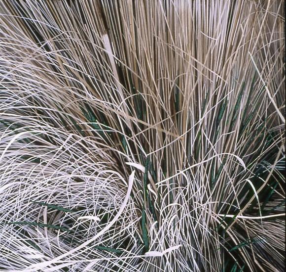 KAREN KITCHEL, DEAD GRASS 18, EARLY SPRING oil on panel