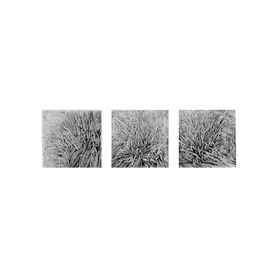 KAREN KITCHEL, TRIPLE BIG BUNCH graphite on bristol board