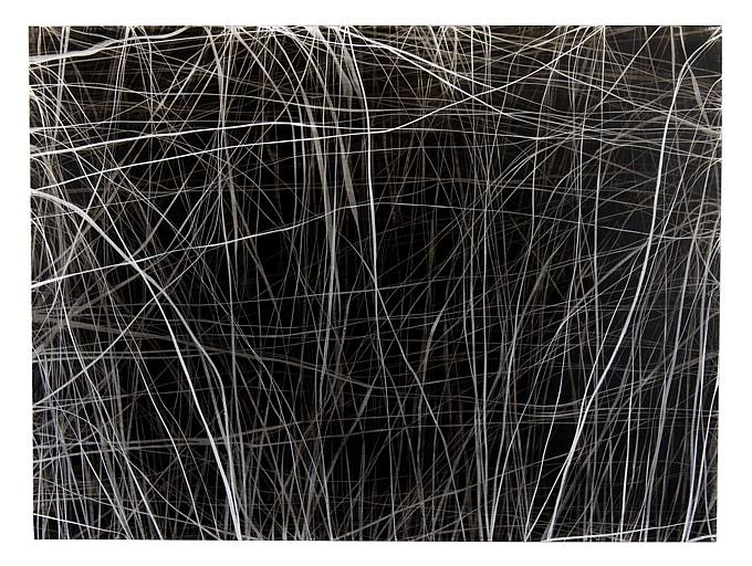 ERIN WIERSMA, 8/3/2017 charcoal/ acrylic on panel