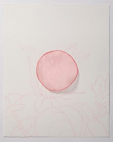 "ANA MARIA HERNANDO, FLOR DE CALABAZA, CURCURBITA (Pumpkin Flower)""No nos ven, pero aquí estamos""<br /> color pencil & organza on paper"