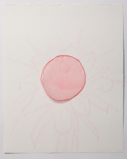 "ANA MARIA HERNANDO, FLOR DE PINTAHAYA (Pitahaya Flower)""No nos ven, pero aquí estamos"" color pencil & organza on paper"